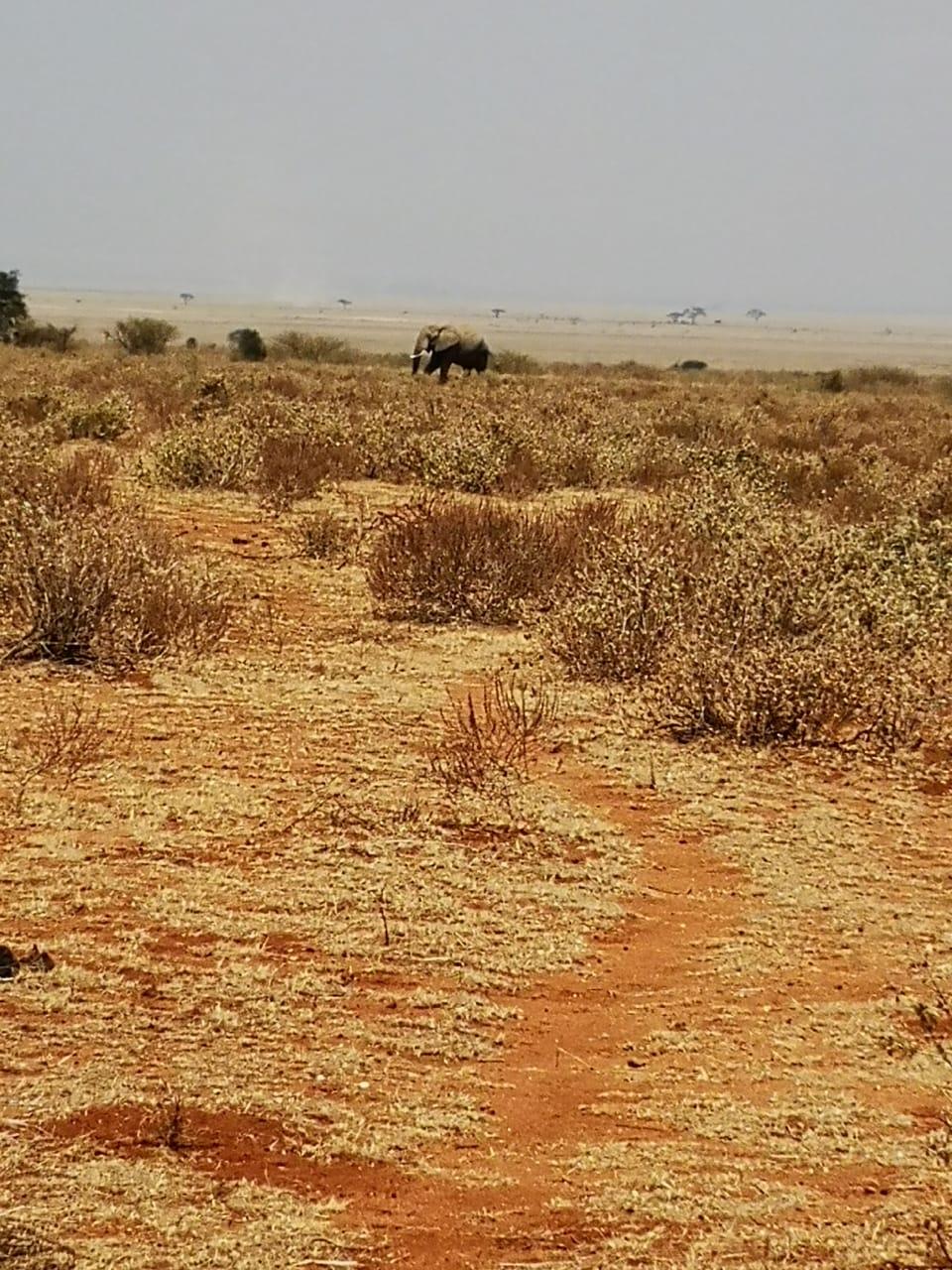Dürre_Elefant_Amboseli Weg_IMG-20190725-WA0008
